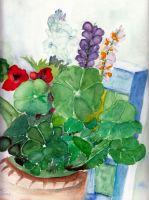 Test amb flors
